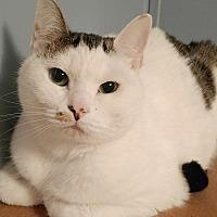 Adopt A Pet :: Samantha - Savannah, GA