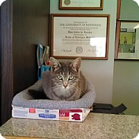 Adopt A Pet :: Sarah - Redwood Falls, MN