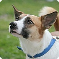 Adopt A Pet :: Scooter - Henderson, KY