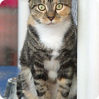 Adopt A Pet :: Toulouse - St Louis, MO