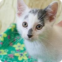 Adopt A Pet :: Aladdin - Muskegon, MI