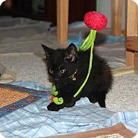 Adopt A Pet :: Maxwell - Santa Rosa, CA