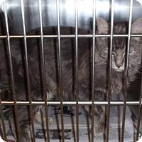 Adopt A Pet :: Zeus - Caistor Centre, ON