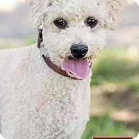 Adopt A Pet :: Sanford - Marina del Rey, CA