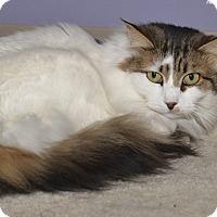 Adopt A Pet :: Lottie - Medina, OH