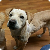 Adopt A Pet :: Lady- ADOPTED! - Lisbon, OH