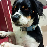 Adopt A Pet :: Snoopy - Battle Creek, MI