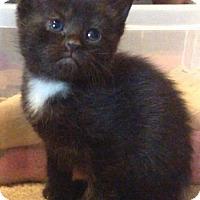 Adopt A Pet :: Roger - Herndon, VA