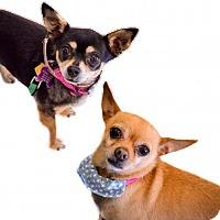 Adopt A Pet :: Kimi & Chino - Mission viejo, CA