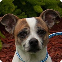 Adopt A Pet :: Pistachio - boston, MA