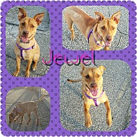 Adopt A Pet :: Jewel - Garden City, MI
