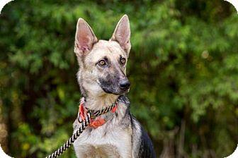 German Shepherd Dog Dog for adoption in Montgomery, Alabama - Pickle
