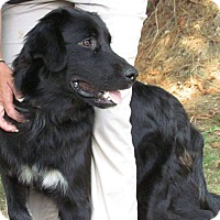 Adopt A Pet :: Jade - New Oxford, PA
