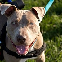 Adopt A Pet :: Connor - St. Louis, MO