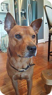 Labrador Retriever Mix Dog for adoption in Mooresville, North Carolina - Flounder