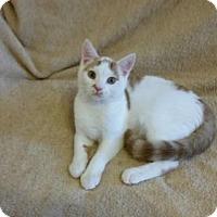 Adopt A Pet :: DANIEL - Ridgewood, NY