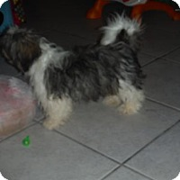 Adopt A Pet :: Captain - Manchester, NH