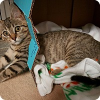 Adopt A Pet :: Hope - Stahlstown, PA
