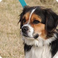 Adopt A Pet :: WINSTON - Franklin, TN