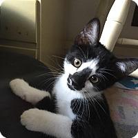 Adopt A Pet :: Panda - Turnersville, NJ
