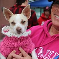Adopt A Pet :: Wilma-ADOPT Me! - Redondo Beach, CA