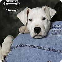 Adopt A Pet :: Bunny - Acton, CA
