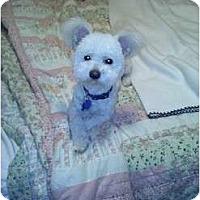 Adopt A Pet :: Teddy - Rescue, CA