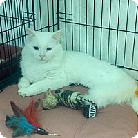 Adopt A Pet :: Casper - london, ON