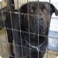Adopt A Pet :: Gary (Urgent!) - Chicago, IL