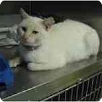 Adopt A Pet :: Sunny - Arlington, VA