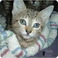 Adopt A Pet :: Angel,Sugar,Duffy - Island Park, NY