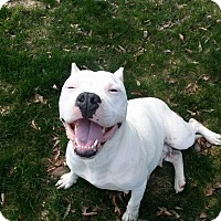 Adopt A Pet :: Pearl - Westminster, MD