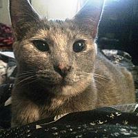 Adopt A Pet :: Gypsy - Palatine, IL