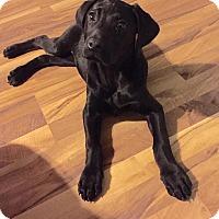Adopt A Pet :: Pattie Ann - Russellville, KY