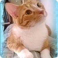 Adopt A Pet :: Samba - Harrisburg, NC