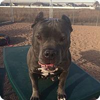 Adopt A Pet :: Jade - Greeley, CO