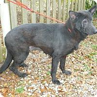 Adopt A Pet :: Mia - Inverness, FL