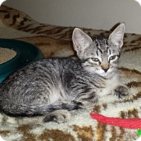 Adopt A Pet :: Muffin - Mesa, AZ