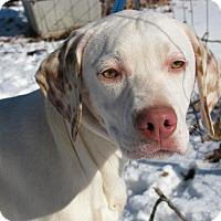 Adopt A Pet :: Trucker - Bedminster, NJ