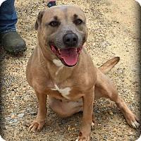 Adopt A Pet :: Nova - Demopolis, AL