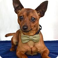 Adopt A Pet :: Chewbacca - Dublin, CA