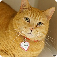 Adopt A Pet :: Andre - East Hartford, CT