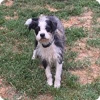 Adopt A Pet :: Luckey - Providence, RI