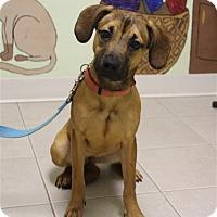 Adopt A Pet :: Annabelle - Elyria, OH
