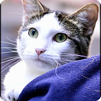 Adopt A Pet :: Mopsy - Ottumwa, IA