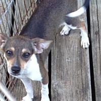 Adopt A Pet :: nikki - Shannon, GA