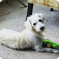 Adopt A Pet :: Snoopy - San Francisco, CA