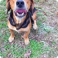Adopt A Pet :: Atlantis - Fairmont, WV