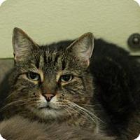 Adopt A Pet :: Dakota - FIV+ - E. Brookfield, MA