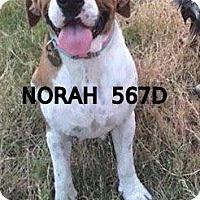 Adopt A Pet :: Norah - Spring, TX